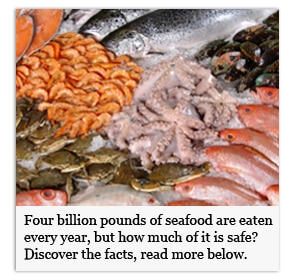 Discover the Facts of Eating Seafood
